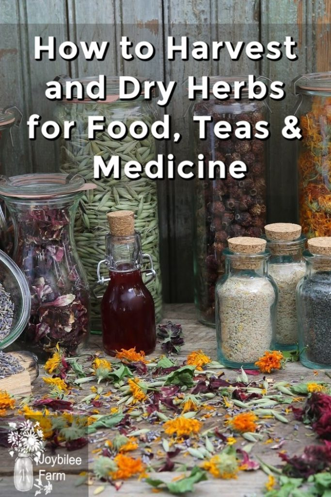 dried herbs in bottles