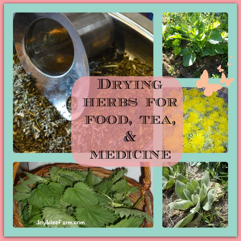 photo collage of drying herbs
