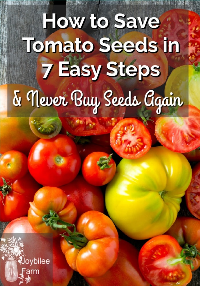How to Save Tomato Seeds in 7 Easy Steps