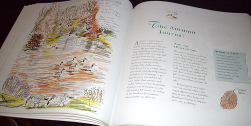 Keep a nature journal and discover a new way of seeing the world around you – Book Review