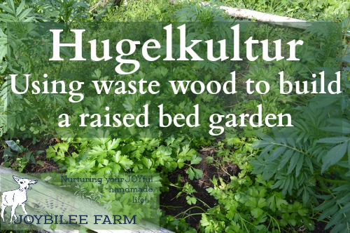 young plants growing in a hugelculture bed - Hugelcultur is an ancient form of composting that utilizes woody waste as the carbon substrata, to retain soil moisture and soil fertility. You can utilize the principles of hugelcultur by simply burying wood waste throughout your yard and garden, in order to increase the moisture holding capacity and fertility of your soil. It breaks down slowly over several seasons. A hugelcultur raised bed is a garden in its own right. It can be any size or shape that you wish, although most hugelcultur raised beds are rectangular.