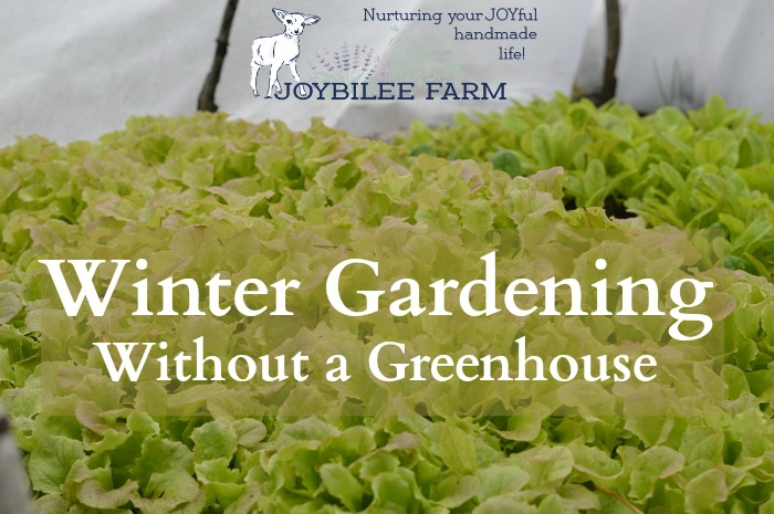 winter gardening in zone 3 without a greenhouse