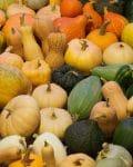 Assorted white, yellow, orange and green squash.