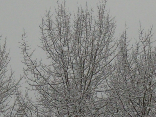 ice storms brings damage to trees and people in the winter
