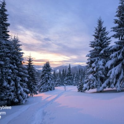 Avoiding Winter Injuries on the Homestead for a Safer Winter