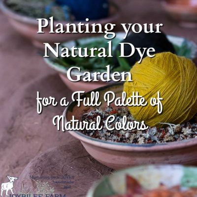 Planting your Natural Dye Garden for a Full Palette of Natural Colours