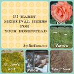 10 Hardy Medicinal Herbs for Your Homestead