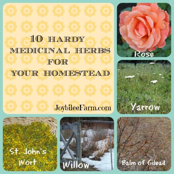 the text 10 Hardy Medicinal Herbs for Your Homestead surrounded by a rose, yarrow, cottonwood, willow and st john's wort.