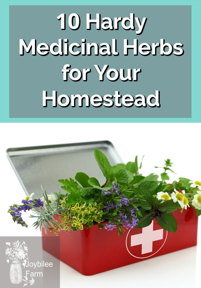 a red tin box with a white medical cross, peaking out of the top of the box are sprigs of several herbs