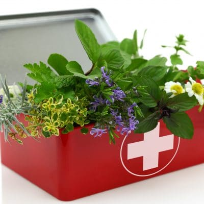 10 Hardy Medicinal Herbs for Your Homestead Apothecary
