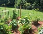 Plants growing in a garden