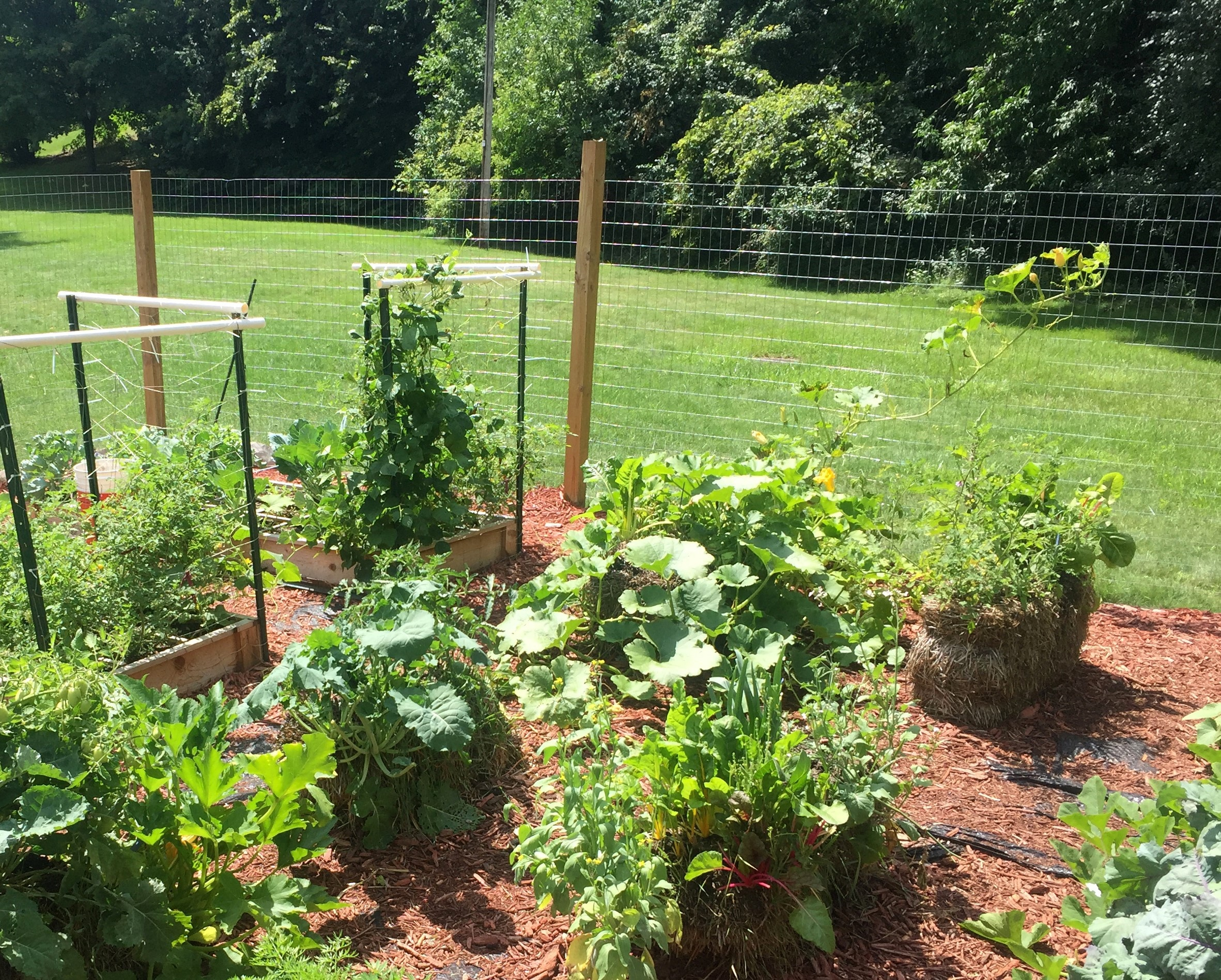 prepare for challenging times by growing your own food