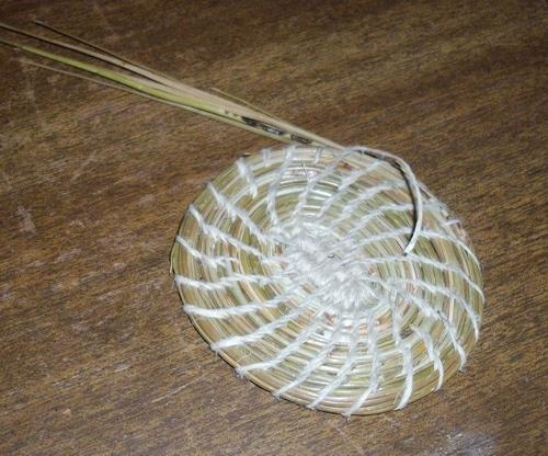 Pine needle basket beginnings