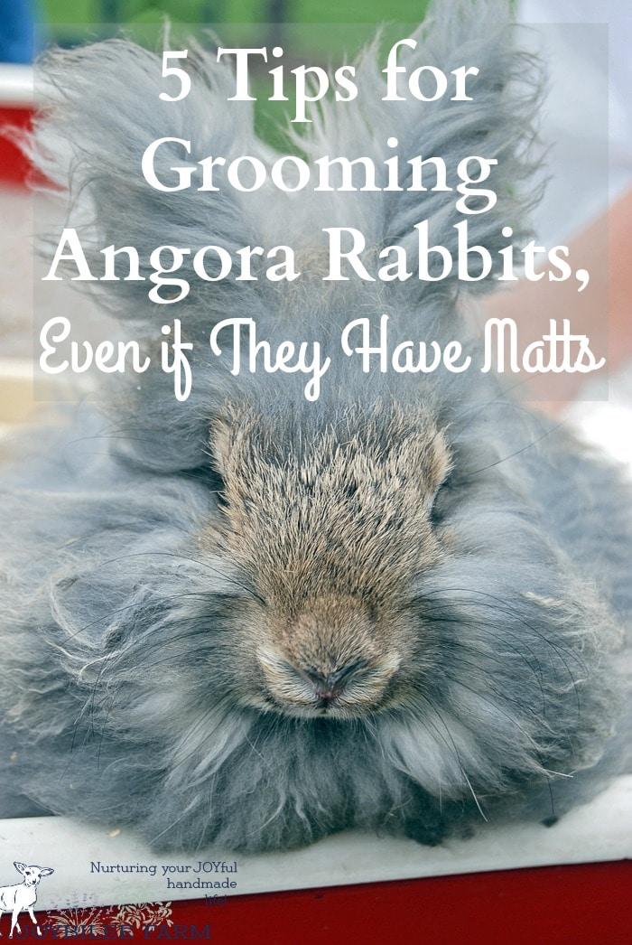 Angora Rabbit care and feeding