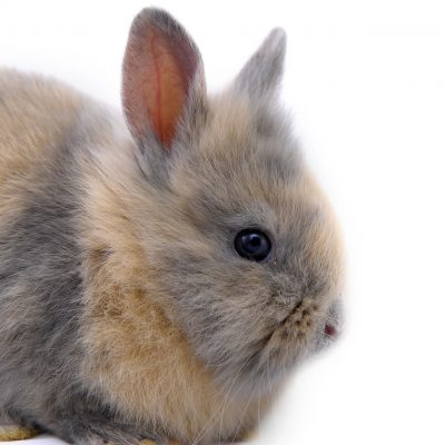 5 Tips for Grooming Angora Rabbits, Even If They Have Mats