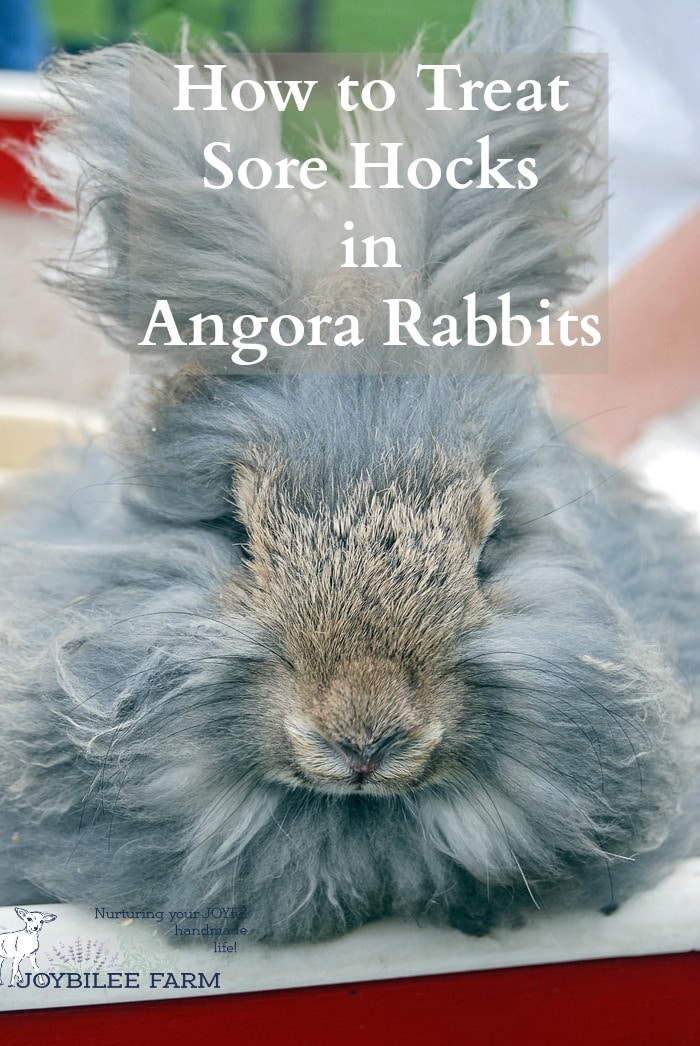 Sore hocks are a common ailment of cage raised rabbits. Here's how to resolve them so that the bunny is happy and healthy.