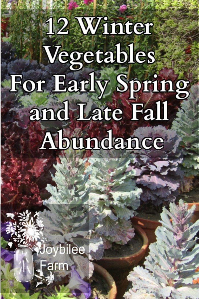 lettuce and decorative kale in pots, these are good winter vegetables you can grow in spring and fall to extend your growing season and have an abundance of fresh veggies