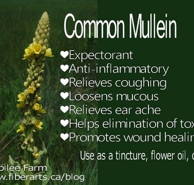 """I need your vote for """"Mullein for Colds and Flu"""""""