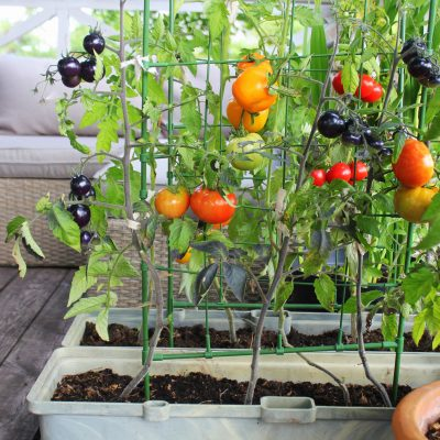 7 Tips for Growing a Successful Vegetable Patch in your Back Yard