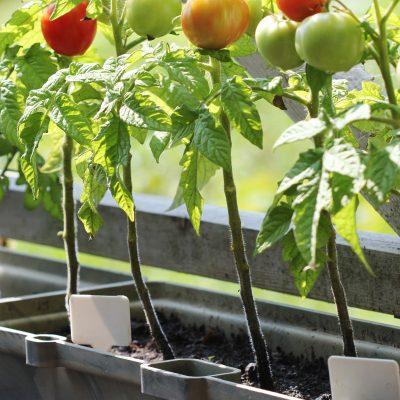 Container Gardening in the North