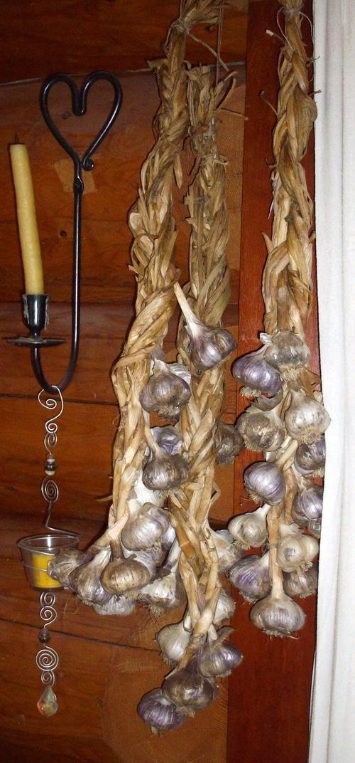 Garlic hanging