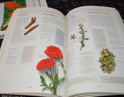 herbal remedy book