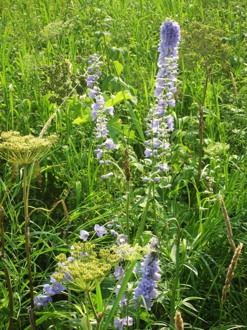 Bee garden of native plants