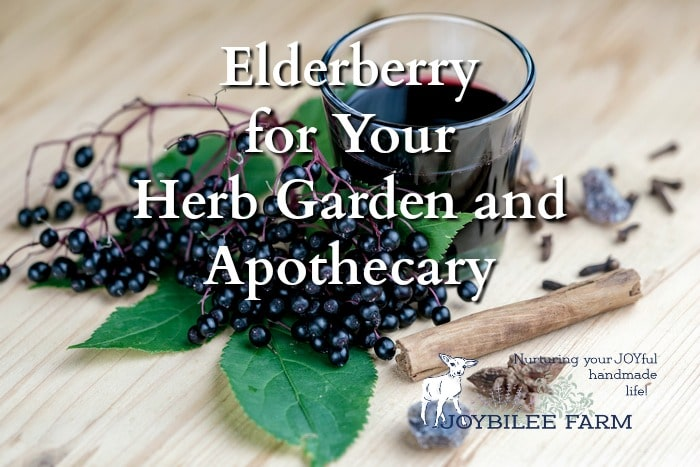 elderberries - grow herbs