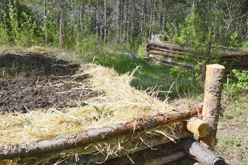 Hugelkultur forest gardening