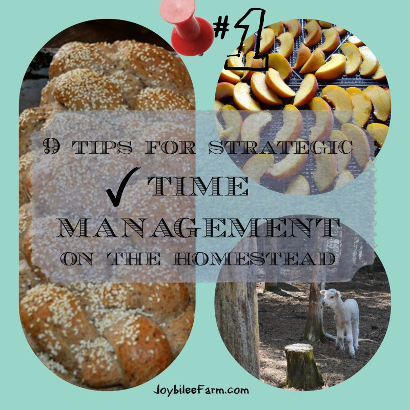 Photo collage for Time Management - fresh baked bread, lamb and preserving food.