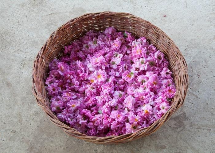 Damascena Rose petals in a basket