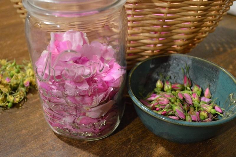 Wild rose petals and rosebuds