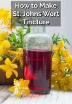 A bottle of ruby red St. Johns Wort Tincture by St. Johns Wort yellow flowers