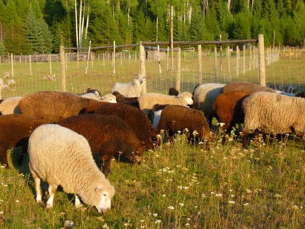 10 tips for farm photographs