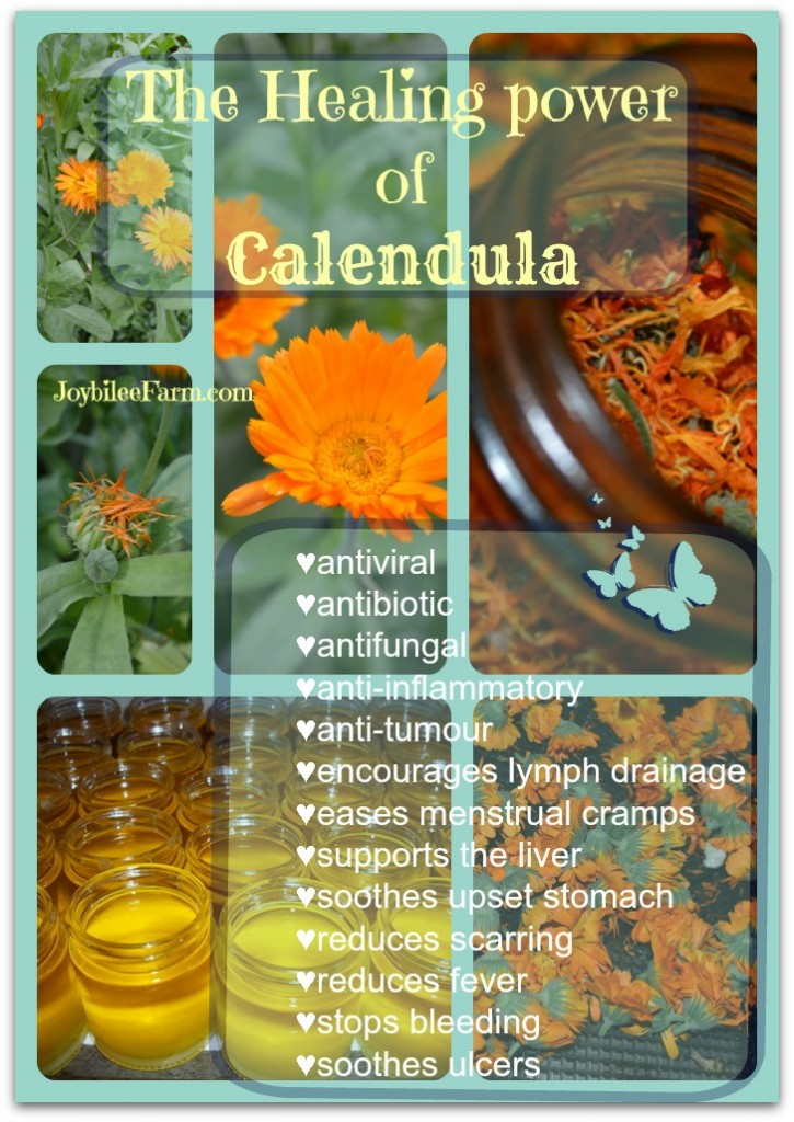"""collage of different calendula pictures with the text overlay """"the healing power of calendula"""""""