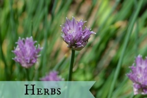 Category herbs