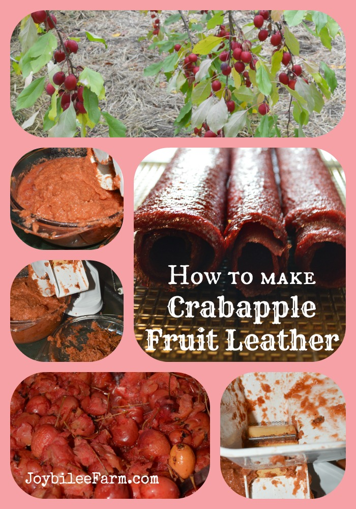 How to make Crabapple Fruit Leather -- Joybilee Farm