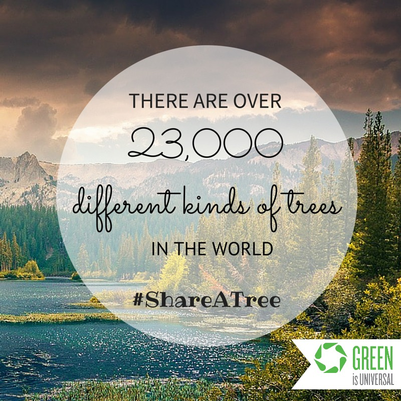 23,000different kinds of trees
