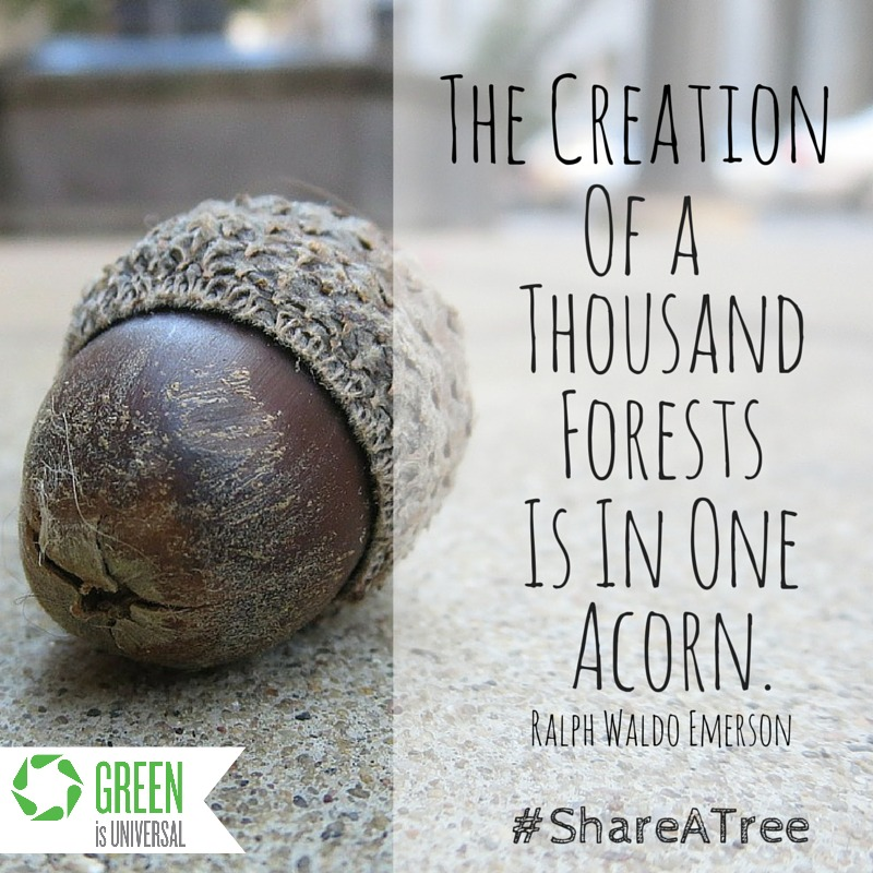 Share A Tree -- Joybilee Farm