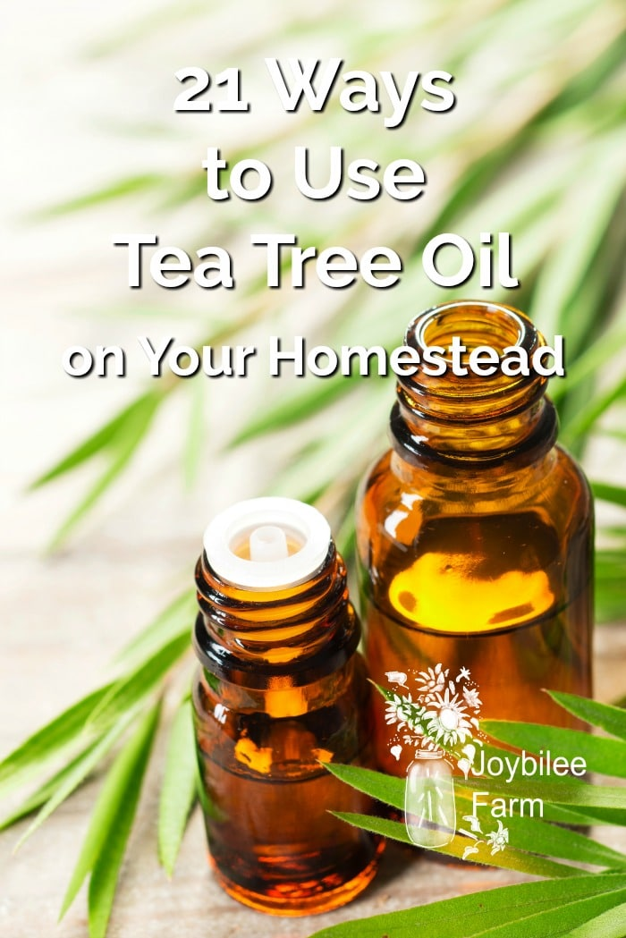 Tea Tree Oil leaves and a couple of essential oil bottles