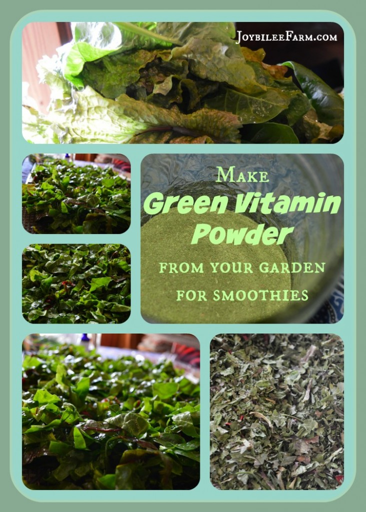 images of fresh lettuce and kale, dried kale, and finished green powder in a collage