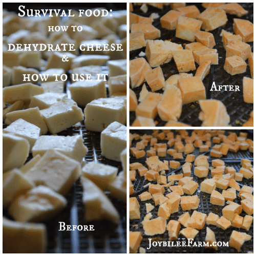 Survival Food: how to dehydrate cheese and how to use it -- Joybilee Farm