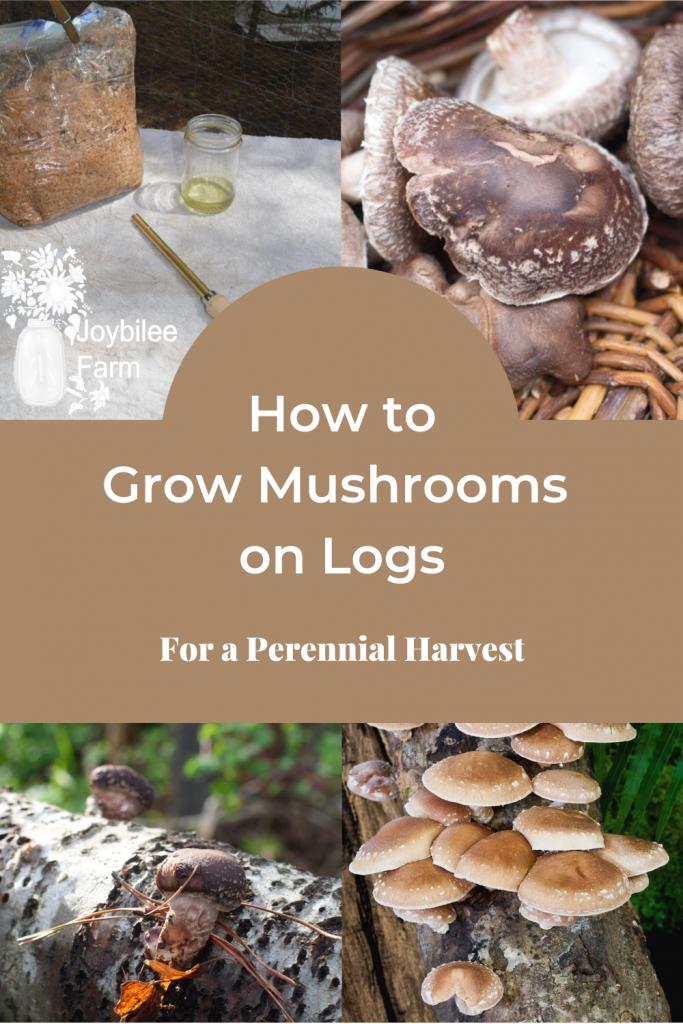 Shiitake mushrooms at various stages