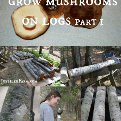 How to Grow Mushrooms on Logs – Part 1