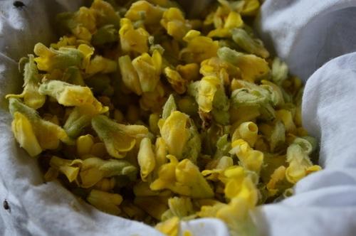 Earache remedies – How to Make Mullein Flower Oil -- Joybilee Farm