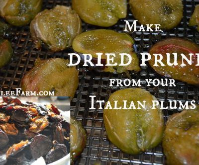 The Easy Way to Make Prunes, and Preserve the Summer Plum Bountry