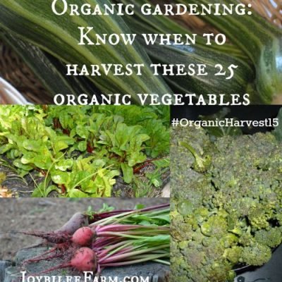 Organic gardening: Know when to harvest these 25 organic vegetables