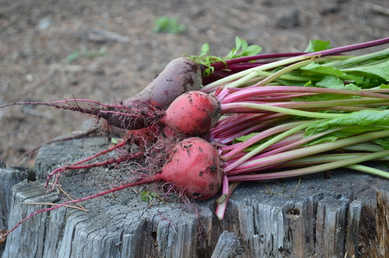 beets an easy to grow vegetable