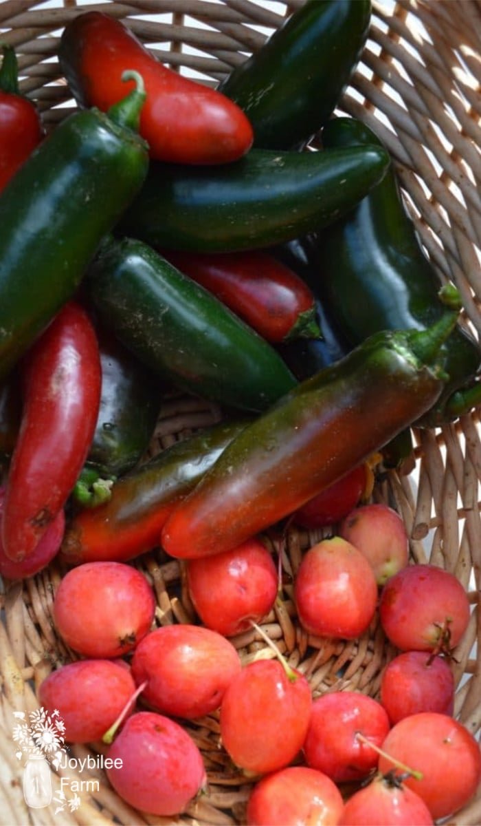 hot peppers and crabapples in a basket - ready to become hot pepper jelly