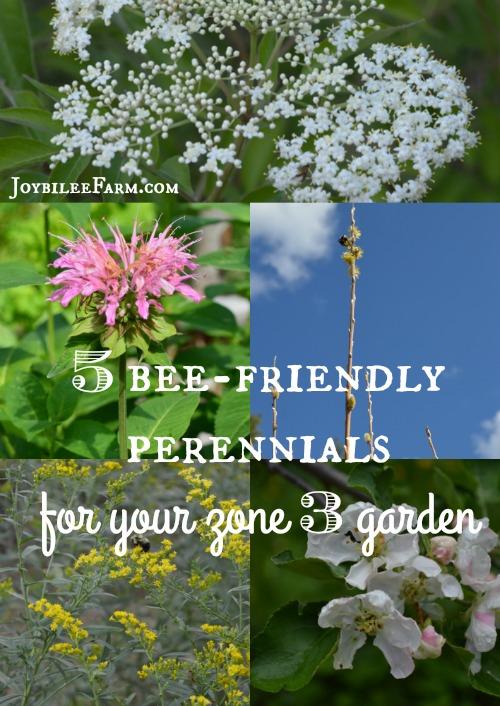 5 Bee Friendly Perennials
